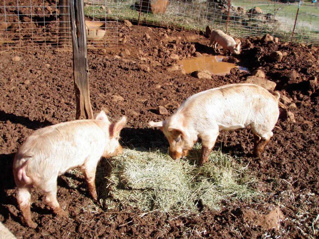 "If you have to get in the pig pen, you can expect to get covered in pig ""leavings."""