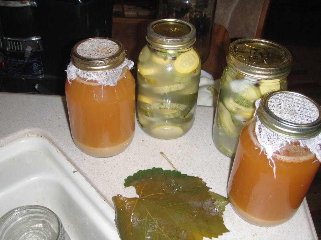 Fermenting pickles (summer squash with onions and garlic) and apple cider vinegar.