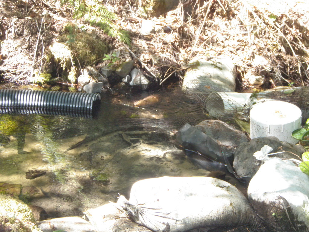 The big spring; this is where we get the water to irrigate the pastures and our drinking water.