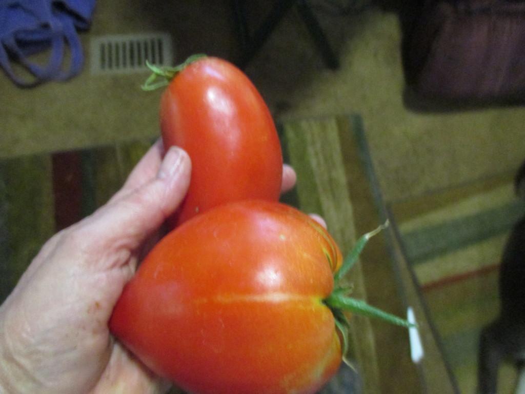 Amish Paste tomatoes.