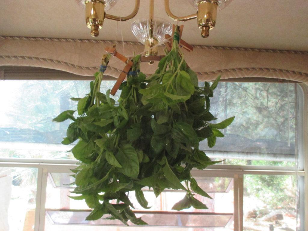 Basil hangers.